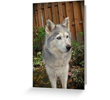 Old Girl  Greeting Card