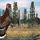 Wild Turkey by Walter Colvin