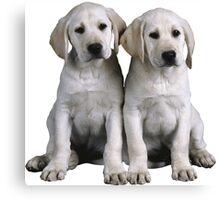 Puppies Canvas Print