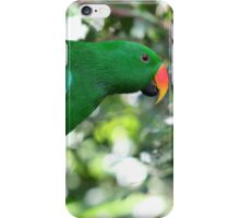 Male Eclectus Parrot - Australia Zoo iPhone Case/Skin