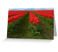 Rows of red Greeting Card