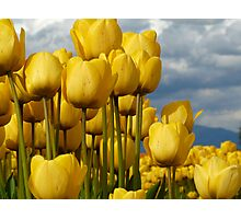 Yellow wonders Photographic Print