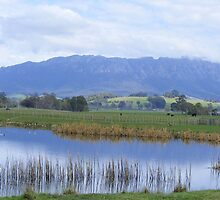 Mt Roland from Sheffield's town border by gaylene