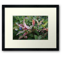 Mountain Blueberry Delight Framed Print