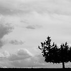 Lonely Tree by cthans