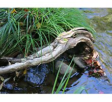 Driftwood Arm Photographic Print
