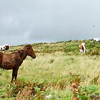Dartmoor Ponys by NicolaLeigh