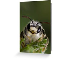 Mining bee (Andrena sp.) Greeting Card