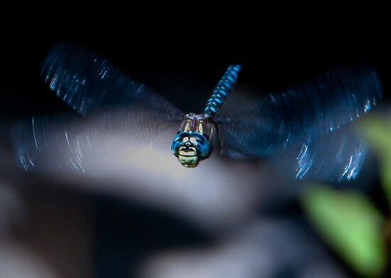 Blue Dreams by David Friederich