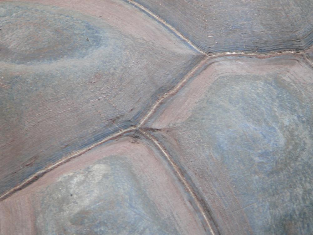 Tortoise shell by Tim Everding