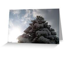 White Spruce Greeting Card
