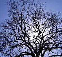 English Tree by Luke Brannon