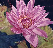 Pink Water Lily by Melissa Tobia
