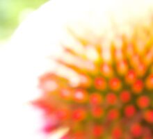 Unfocused Coneflower by colorstorm