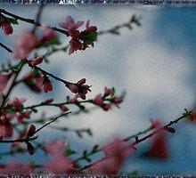 blossom i see by aglaia b