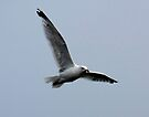 Seagull by SWEEPER