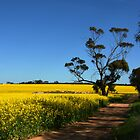 A Yellow Road by trekka