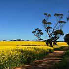 A Yellow Road by trekka