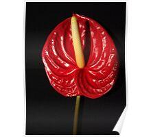 Alluring Anthurium Poster