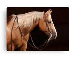 Palomino Quarter Horse at DSR Ranch Canvas Print