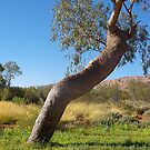 Boab Tree by Maryanne Fenech-Gatt