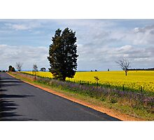 canola pattersons curse and a road Photographic Print