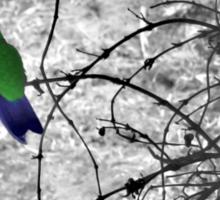 Costa Rican Hummingbird on Volcan Irazu Sticker