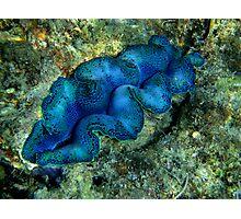 Whitsunday underwater world Photographic Print