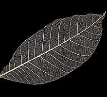 Transparent Leaf by Marguerite Foxon