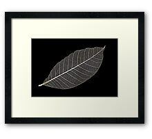 Transparent Leaf Framed Print
