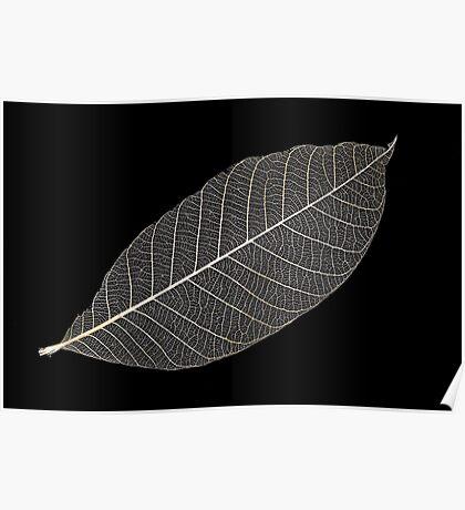Transparent Leaf Poster
