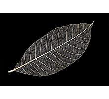 Transparent Leaf Photographic Print