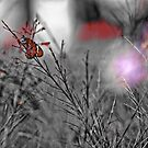 Tiny pricess, BW Butterfly. by Kornrawiee
