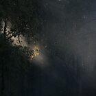 Light by trekka