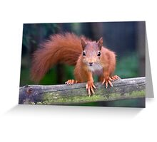 Baby Red Greeting Card