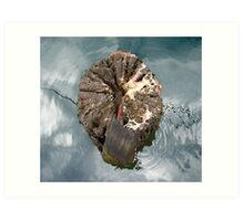 Tree stump, Port Fairy Art Print