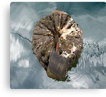 Tree stump, Port Fairy Canvas Print