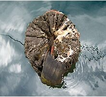 Tree stump, Port Fairy Photographic Print