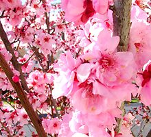 Blossoms by Rashmita & Raj