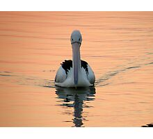 "Pelican ""just cruising"" Photographic Print"