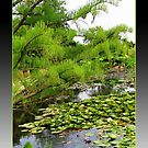 Green Paradise - The Lily Pond at Hyde Hall by BlueMoonRose
