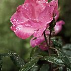 Raindrops on Roses... by Anita Pollak