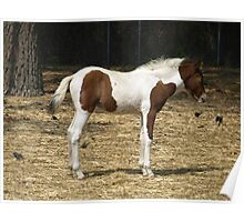 Foal Model Poster