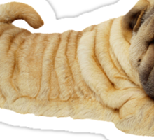 Shar Pei Sticker
