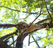 Costa Rican Squirrel by Wabacreek Photography