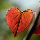 Cercis Canadensis 'Forest Pansy' by Samantha Creary