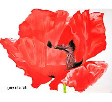 Poppy 3 Photographic Print