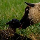 Motherly Love by Shari Galiardi