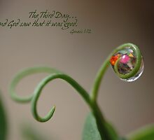 The Third Day by back40fotos