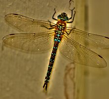 Dragonfly Fable by Yvette Bielert
